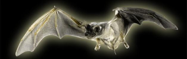 The Indignant Bat
