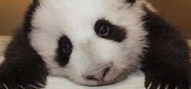 SEGA is Sad Panda Over Dead Space Extraction